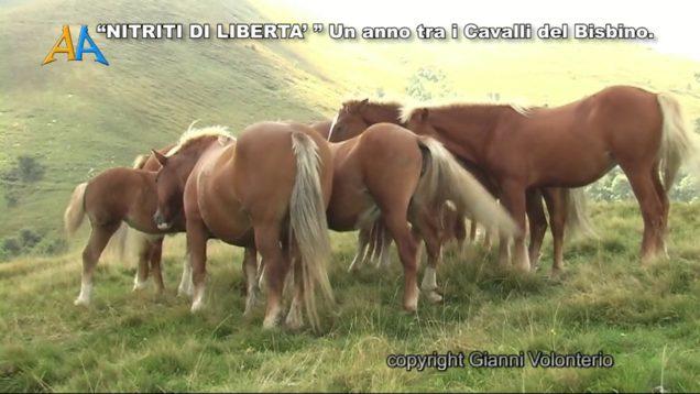 Nitriti di Libertà – Un anno tra i cavalli del Bisbino