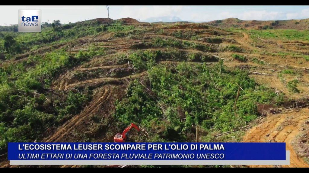 L'ECOSISTEMA LEUSER SCOMPARE PER L'OLIO DI PALMA