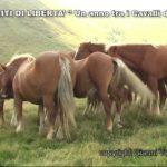 Nitriti di Libertà - Un anno tra i cavalli del Bisbino