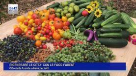 FOOD FOREST, CIBO DALLA FORESTA URBANA PER TUTTI.