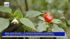 IMBALLAGGI ORGANICI, L' ALTERNATIVA BIOLOGICA E SOSTENIBILE