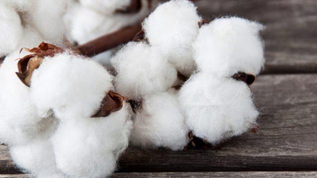 Baumwolle – Cotton
