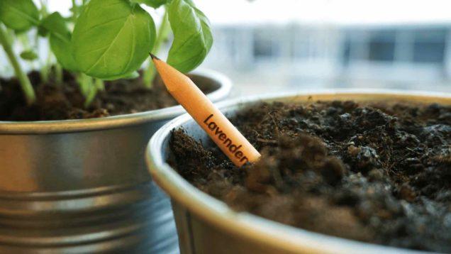 matita-sprout-lavanda