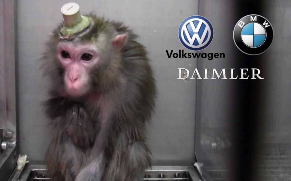 SPERIMENTAZIONE ANIMALE, GAS DI SCARICO NOCIVO SU SCIMMIE. SOTTO ACCUSA VOLKSWAGEN, DAIMLER E BMW