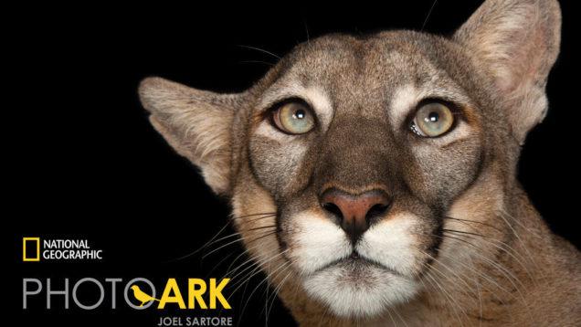 photo-ark