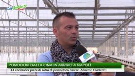 POMODORI DALLA CINA, CONTAINER IN ARRIVO A NAPOLI. COLDIRETTI LANCIA L'ALLARME