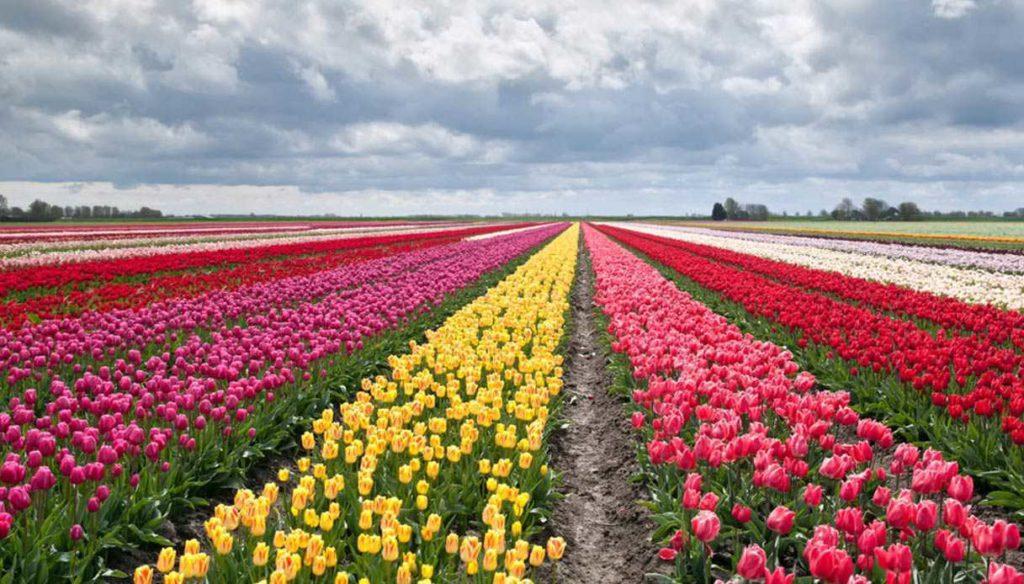 A 48 ore dall'inaugurazione, vandali devastano il parco dei tulipani di Roma