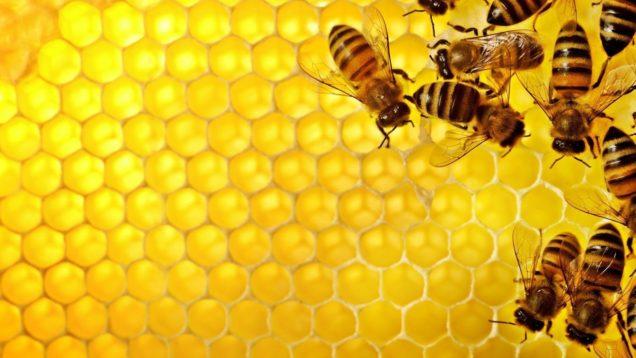 ape-regina_associazione_mammagatta-3