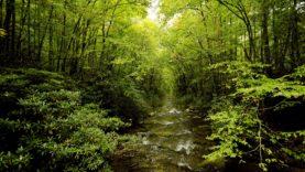rivo-in-un-bosco,-alberi-verdi-150419