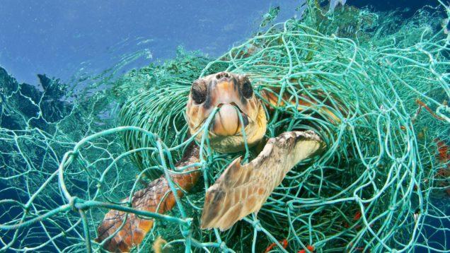 turtle-caught-in-net-e1496755221647
