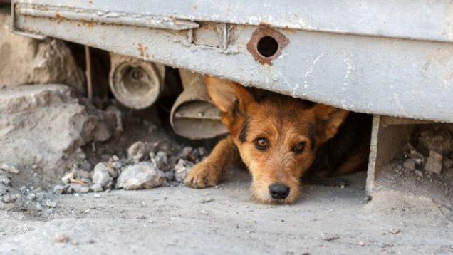 http_media.petsblog.it88efsoccorso-animali-abbandonati