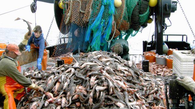 pesca-industriale1