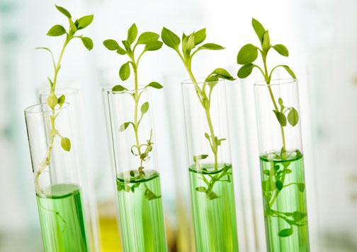 CORTE UE FRENA BIOTECNOLOGIE, PER PIANTE E ANIMALI BIOTECH STESSE REGOLE DEGLI OGM