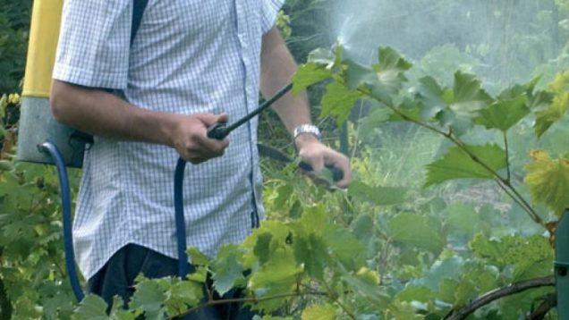 1531721512139.jpg–pesticidi__la_ue_prepara_il_giro_di_vite_sul_verderame