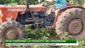 EFSA CONFERMA TOSSICITA' DEL VERDERAME. UE SI PREPARA A LIMITARNE L'USO