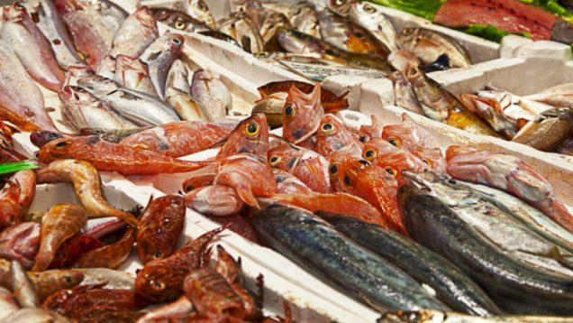 pesce.jpg_156322839