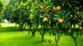 agricoltura-biologica-in-italia_NG2
