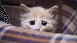 come-proteggere-gli-animali-dai-botti-di-capodanno