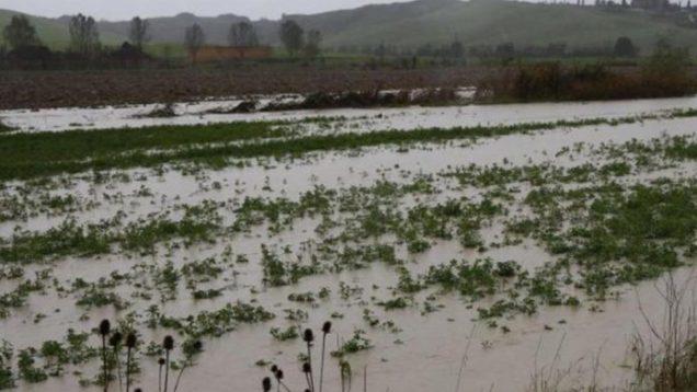 maltempo-danni-agricoltura-1132×670-696×412