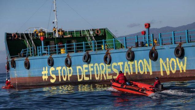 stop deforestai