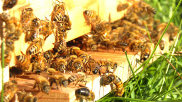 apicoltura-02-735×400