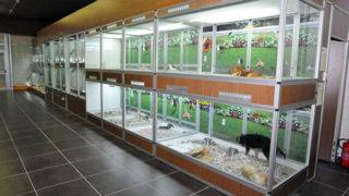 cani_negozio