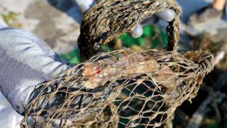 rifiuti pescatori petizione