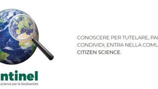 biodiversità citizen science
