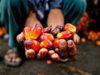 olio di palma biocarburanti