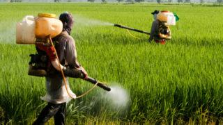 agricoltura muroni pesticidi