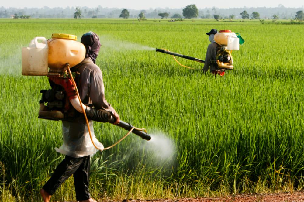 Risultati immagini per PESTICIDI IN AGRICOLTURA