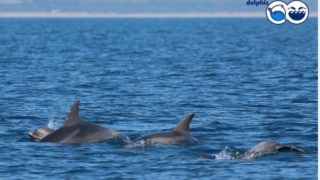 ostia delfini