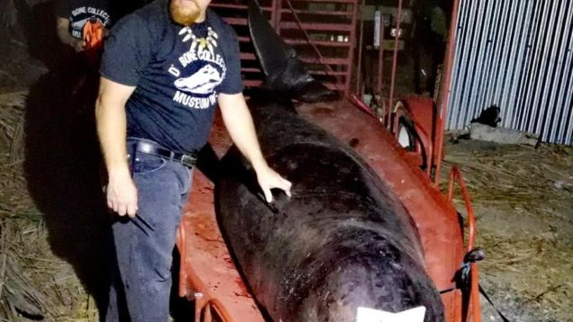 palstica balena