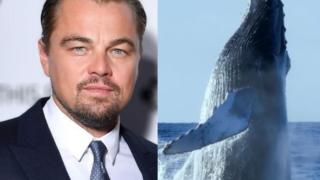 balene di caprio
