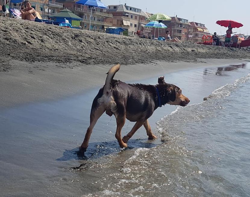 Animali, a Ostia la Feedog è lunga la metà, 150 metri di spiaggia libera per cani