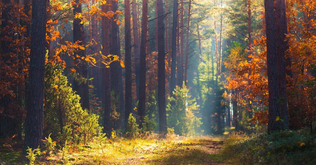 Foreste in aumento in Italia: +4,9% dal 2005, ma gli incendi boschivi continuano a preoccupare