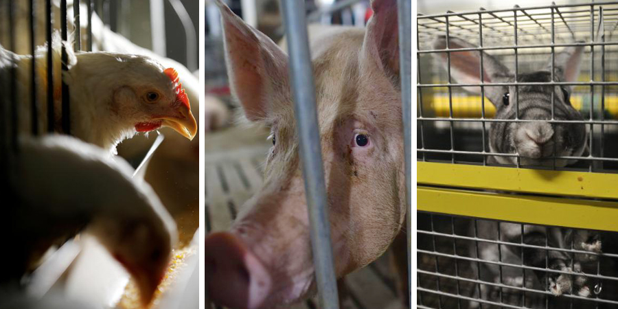 animali in gabbia