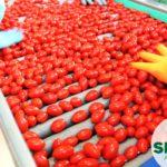 Sfera agricola, la passata di pomodoro in vendita in farmacia