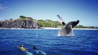 balene blob