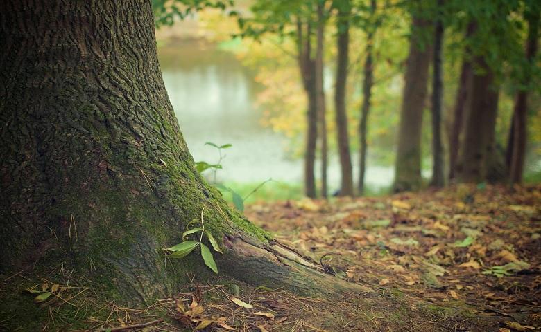 Giornata mondiale delle Foreste e dei Boschi, gli eventi in programma