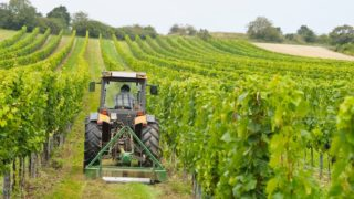 agricoltura made in italy