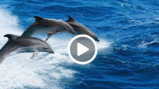 delfini pescatori