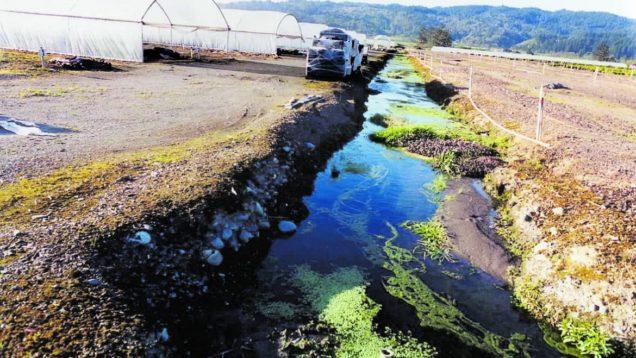pesticidi acqua