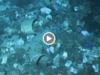 rifiuti plastica video francia