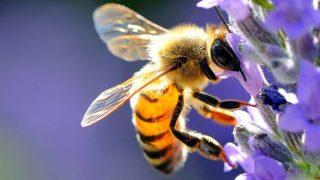 api giornata mondiale