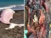 capodoglio rosa plastica