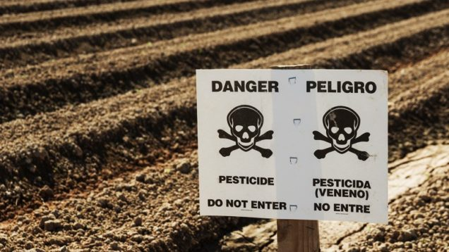 pesticida Clorpifiros