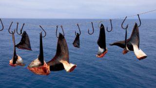 squali pinne canada