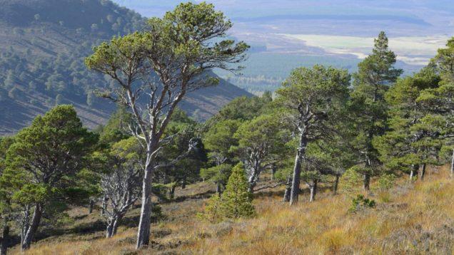 alberi scozia