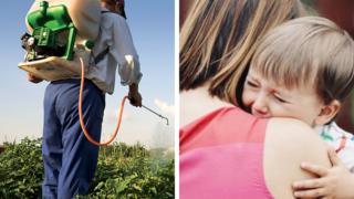 pesticidi clorpirifos
